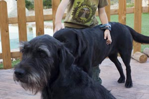 Mascotas - Casas Rurales Castril