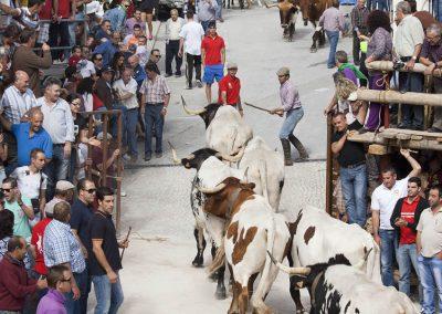 casasruralescastril-toros-de-Castril-22