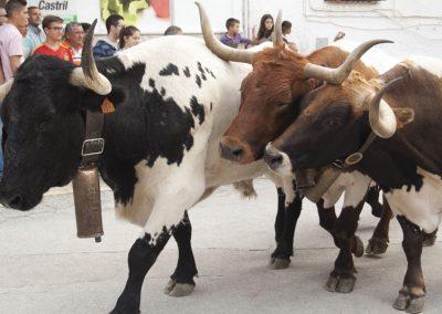 casasruralescastril-toros-de-Castril-32