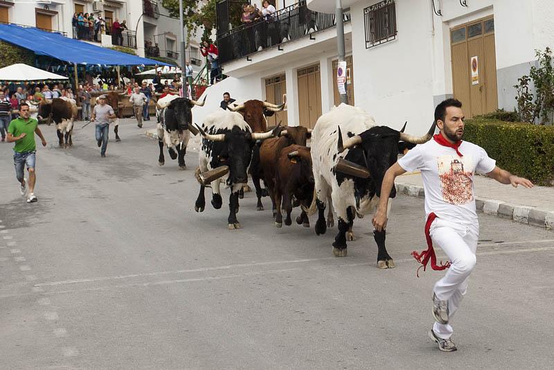 Las fiestas patronales, los Toros de Castril: el segundo fin de semana de octubre