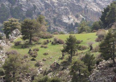 Parque-Natural-de-la-Sierra-de-Castril